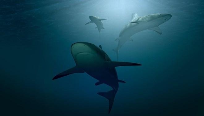 Corono aşısı için köpekbalığı katliamı
